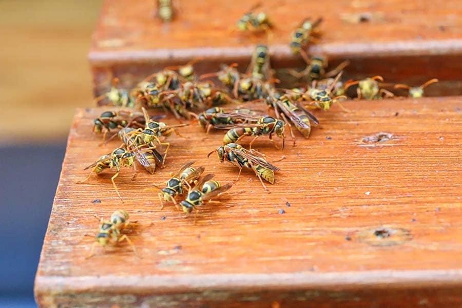 api su tavolo