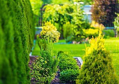 giardino-con-alberi.jpg