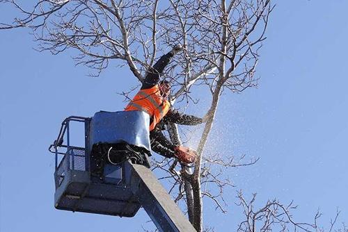 giardiniere di giardinaggio roma abbatte un albero