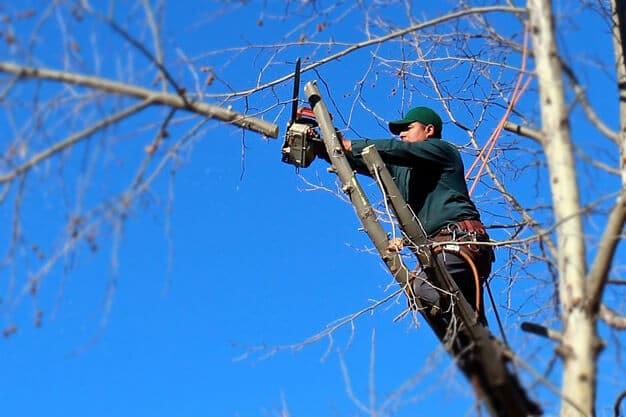 giardiniere di giardinaggio roma pota un albero