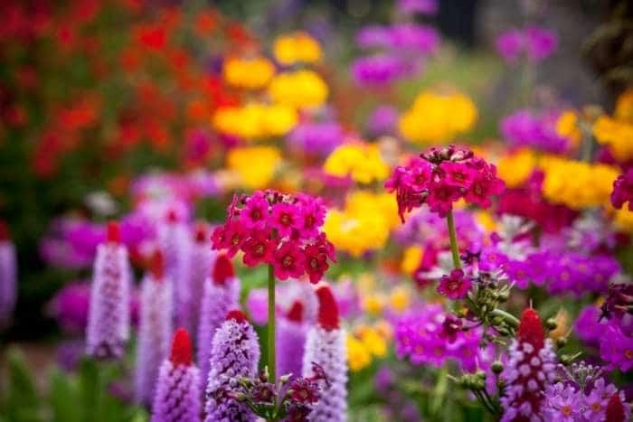 Aiuole giardino
